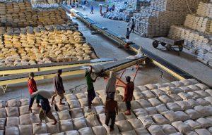 Xuất khẩu gạo hữu cơ: Hướng đi mới nâng cao giá trị thương mại