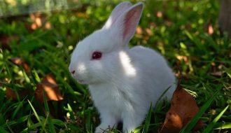 Chăn nuôi thỏ bà con cần chú ý những gì để đem lại hiệu quả cao ?