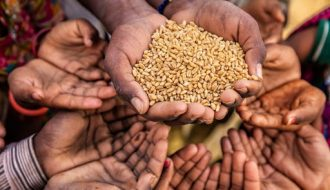 Có nên cải thiện hệ thống lương thực thực phẩm toàn cầu như lời FAO?