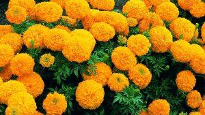 Điểm danh ngay các loài hoa cực hiếm, cực đắt trên thế giới