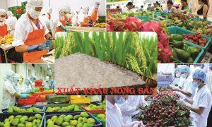 Đón chào năm 2021, nông sản Việt Nam mở hàng 3,5 tỷ USD