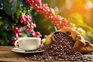 Hiếm thấy giá cà phê có 4 đợt tăng mạnh trong tuần