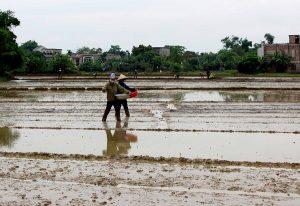 Những lưu ý khi gieo lúa trong mùa vụ bà con cần biết để cây lúa phát triển tốt