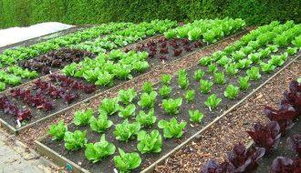 Cách trồng rau vụ hè đem lại năng suất cực cao