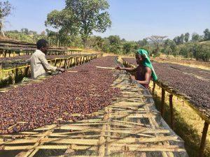 Dự báo thị trường nông sản thế giới