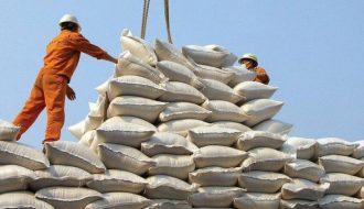 """Những giống lúa """"cực phẩm"""" cho thị trường xuất khẩu gạo"""