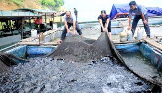 Những lưu ý quan trọng khi chăm sóc cá trong thời điểm giao mùa