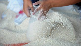 Philippines: Nhập khẩu gạo được USDA hạ dự báo