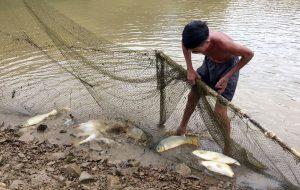 Tăng cường sức đề kháng cho cá bằng thức ăn giàu đạm