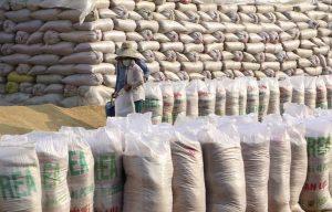 Sau nhiều thập kỷ, gạo Ấn Độ xuất khẩu sang Việt Nam