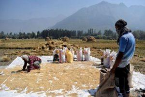 Tuyên bố không thiếu gạo, Việt Nam vẫn phải nhập khẩu gạo Ấn Độ