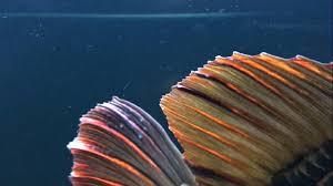 Bệnh nấm thủy my đã gây thiệt hại không nhỏ cho nghề nuôi cá nước ngọt