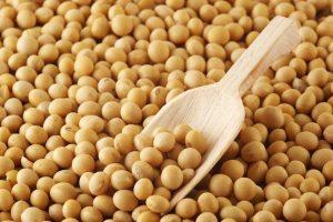 Thị trường đậu tương trên thế giới tiếp tục có xu hướng giảm